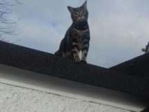 Cat-On-A-Roof
