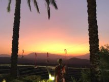 Palm Tree-Sunset